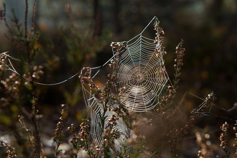 Morning dew in spider web. Lieberose, Brandenburg, Germany. © Daniel Rosengren / FZS