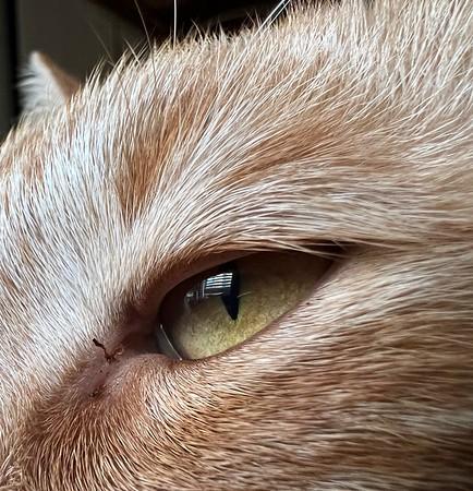 Macro shot of Jinx the cat