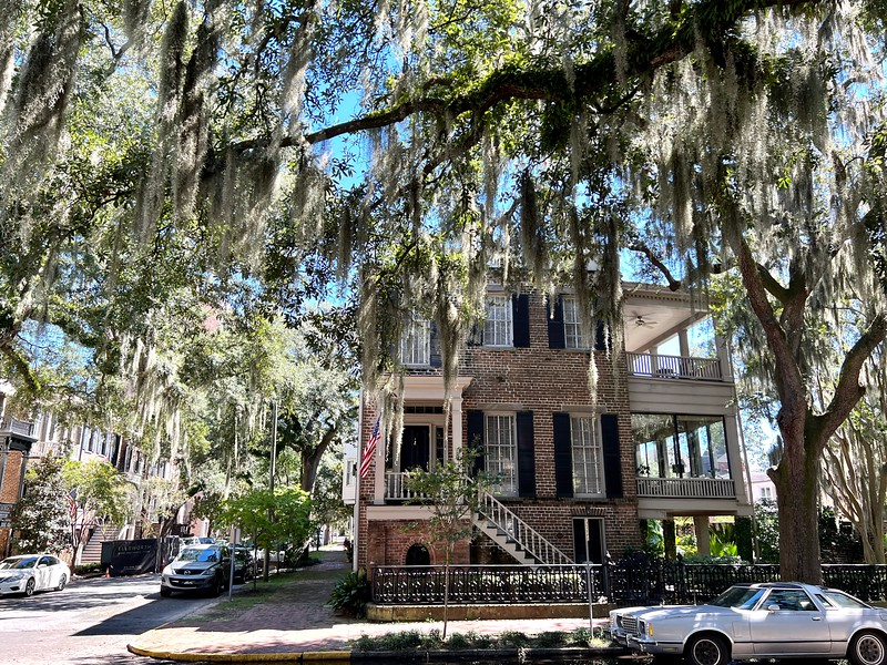 Calhoun Street in Savannah