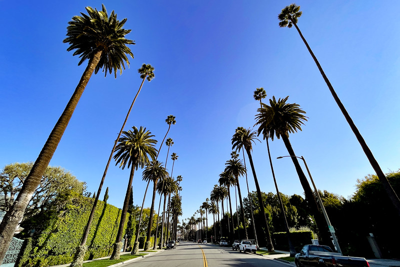Beverly Blvd. Palm Trees