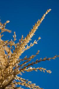 Harvest seed