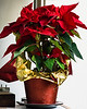 Not at the harbor. My Christmas Poinsettia.