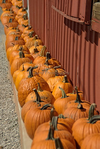 PUMPKIN ROAD