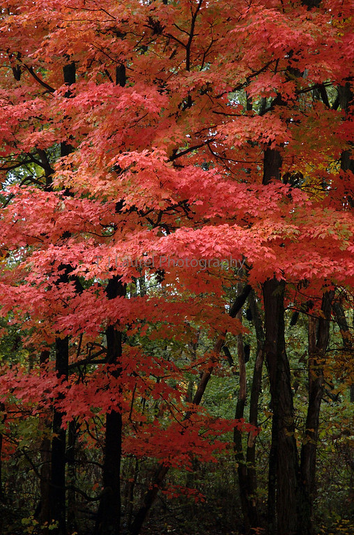 The colors of beautiful Brown Co. State Park