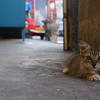 place of refuge of a little kitten in the middle of bustling city.