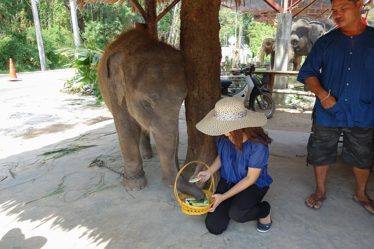Phuket Sea View Elephant Camp and Monkey Show - Inspection for guests of Mangosteen Resort & Ayurveda Spa