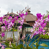 Flowers @ Mangosteen Resort & Ayurveda Spa