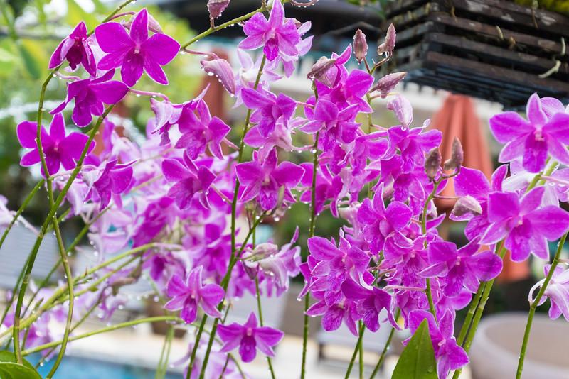 Flowers @ Mangosteen Resort & Ayurveda Spa