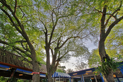 Rawai Seafood Restaurant Trees HDR