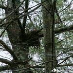 Phyllis Massey Stafford Conservation Area 10