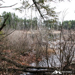 Phyllis Massey Stafford Conservation Area 34