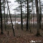Phyllis Massey Stafford Conservation Area
