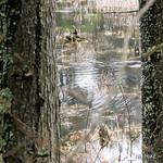 Phyllis Massey Stafford Conservation Area 27