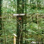 Phyllis Massey Stafford Conservation Area 9