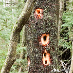 Phyllis Massey Stafford Conservation Area 13