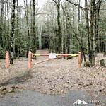 Phyllis Massey Stafford Conservation Area 5