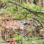 Phyllis Massey Stafford Conservation Area 36