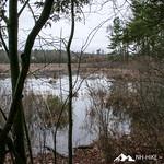 Phyllis Massey Stafford Conservation Area 33