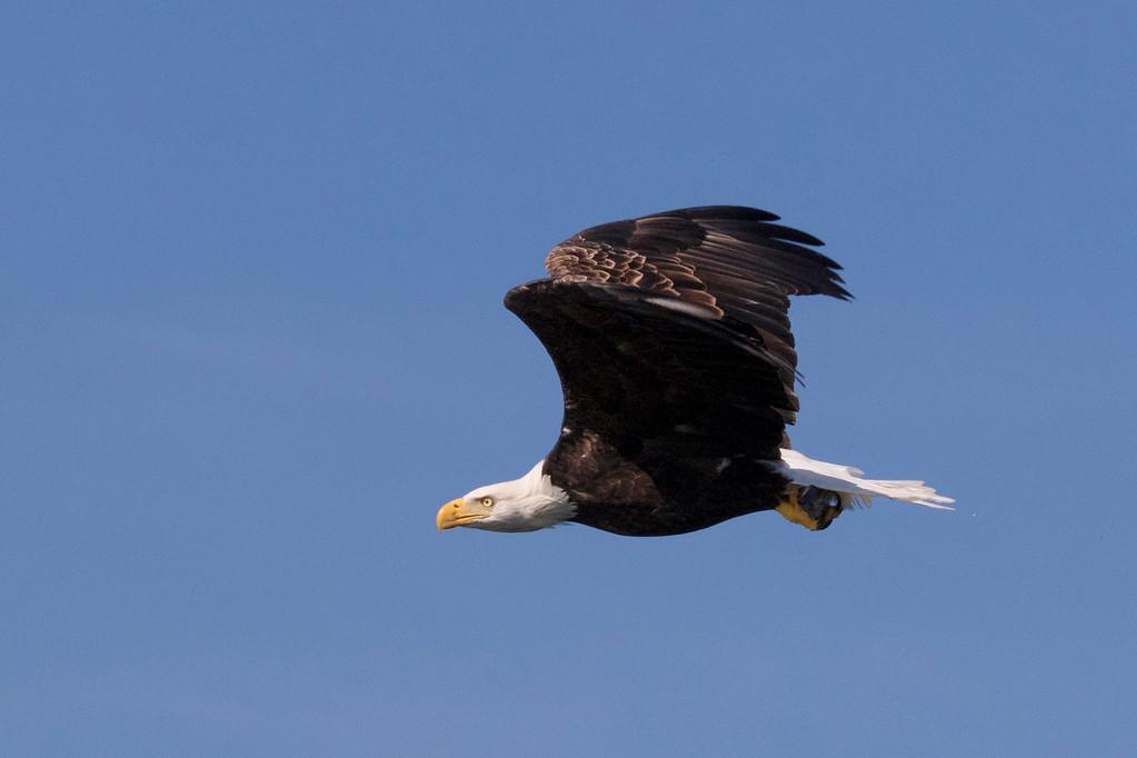 NS eagle