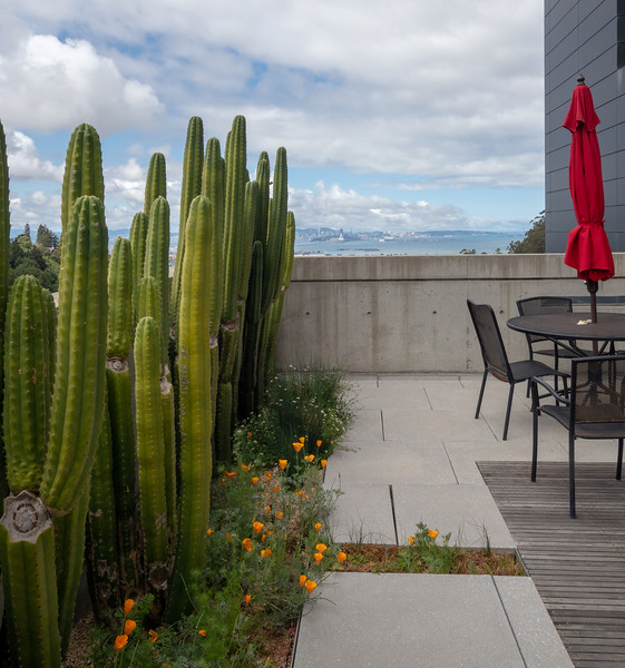 Cacti, Red Umbrella, and San Francisco Bay View from Molecular Foundry Lab