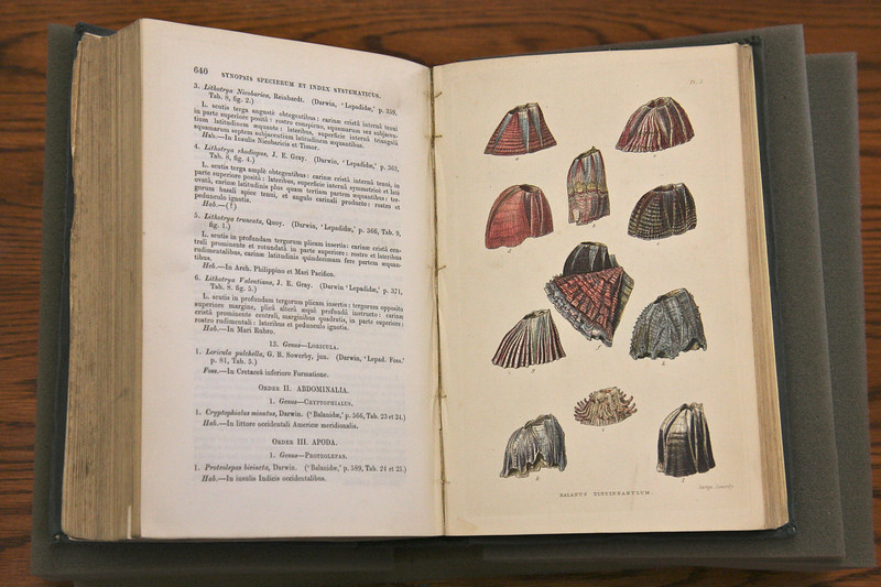 Darwin's expertise and contribution to biology was unsurpassed in the 19th century.  Here is his monograph on barnacles.