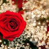 For Amy...  Happy Valentine's Day!!!
