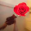A Rose is a rose is a rose is a rose