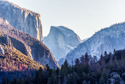 yosemite and sequoia--9