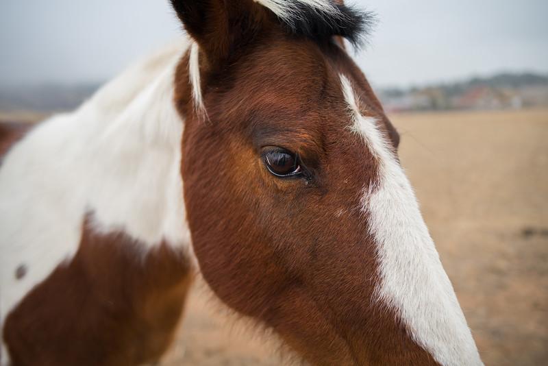 Photogenic Equine (Pretty Horse)