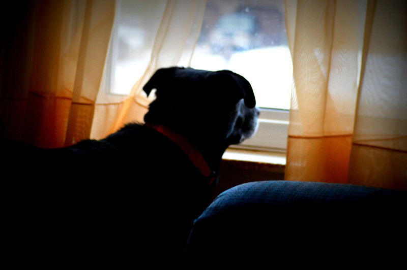 Molly at the Window