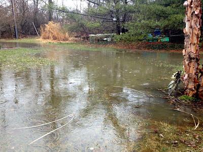 Backyard Pond
