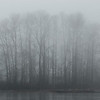 Jan 17th - Trees along the river in the fog.  (Fraser River, Vancouver)