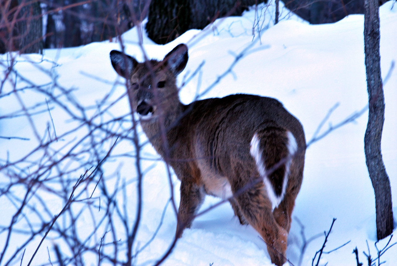 01-12-2010 - A mamma and two furry offspring were alongside the road. This adolesent was the only one who would look at me.