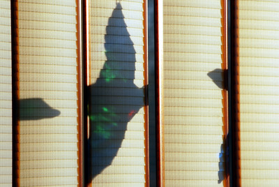 12-11-2009 - In this picture, the rising sun is shining through a stained glass duck hanging to the right and pointing left resulting in these shadows on vertical blinds.