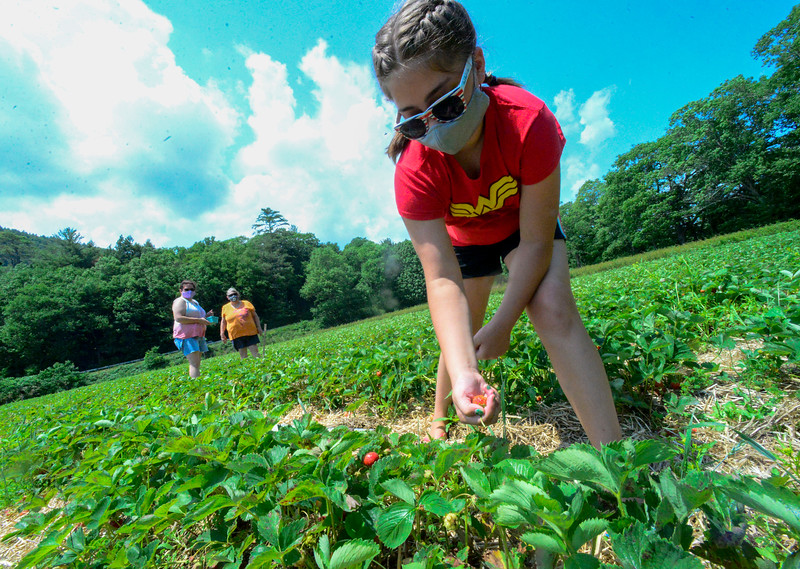 KRISTOPHER RADDER — BRATTLEBORO REFORMER<br /> Olivia Gale, 10, from Dummerston, Vt., picks strawberries with her mother, Heidi White Gale, and grandmother, Stella White, at Duttons Berry Farm, in Newfane, Vt., on Tuesday, June 23, 2020.
