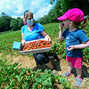 KRISTOPHER RADDER — BRATTLEBORO REFORMER<br /> Allison Maynard, of Jacksonville, Vt., watches as her 3-year-old daughter, Emarie, eats a strawberry while strawberry picking at Duttons Berry Farm, in Newfane, Vt., on Tuesday, June 23, 2020.