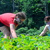 KRISTOPHER RADDER — BRATTLEBORO REFORMER<br /> Olivia Gale, 10, from Dummerston, Vt., picks strawberries with her mother, Heidi White Gale, at Duttons Berry Farm, in Newfane, Vt., on Tuesday, June 23, 2020.
