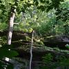 Pickle Springs-26