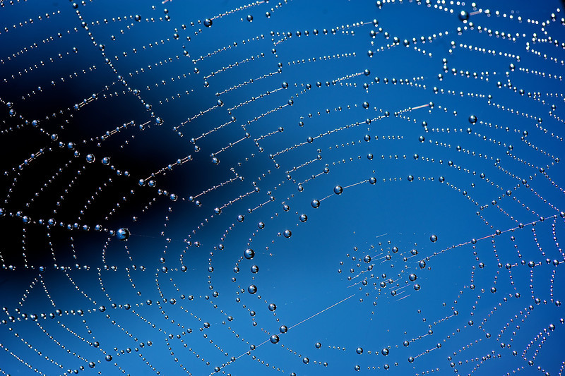 Spiderweb covered in morning dew