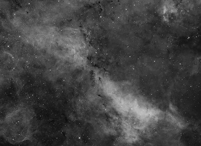 IC1318a, LBN239, 241, 243, IC1311 in Cygnus