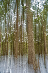 Abstract multiple-exposure exposure multiple motion image of trees in winter pictorial art
