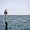 20120701 Bird at Bournemouth
