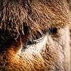 20120312 Donkey Eye