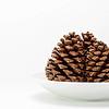 20121126 Pine Cones