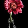 20130622 High Speed Flower