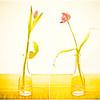 20130403 Tulip Diptych
