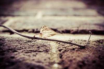 20140127 Little Leaf