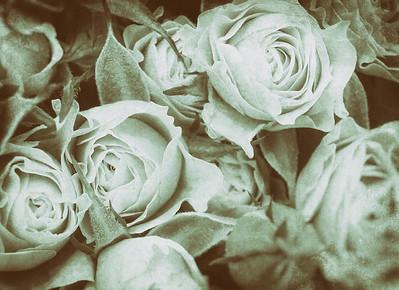 20140103 Analogue Roses
