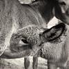 20140803 New Forest Donkeys