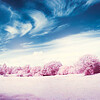 20140630 Pink Pasture